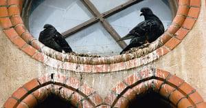 Birds on Ledge