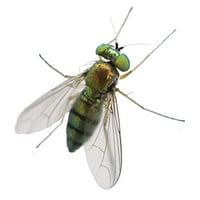 Greenhead-Fly-Exterminator-1