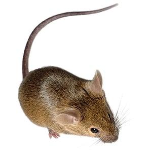 Mouse-Exterminator