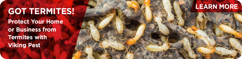 Termites-820x200