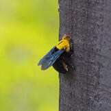 carpenter-bee-pest-day