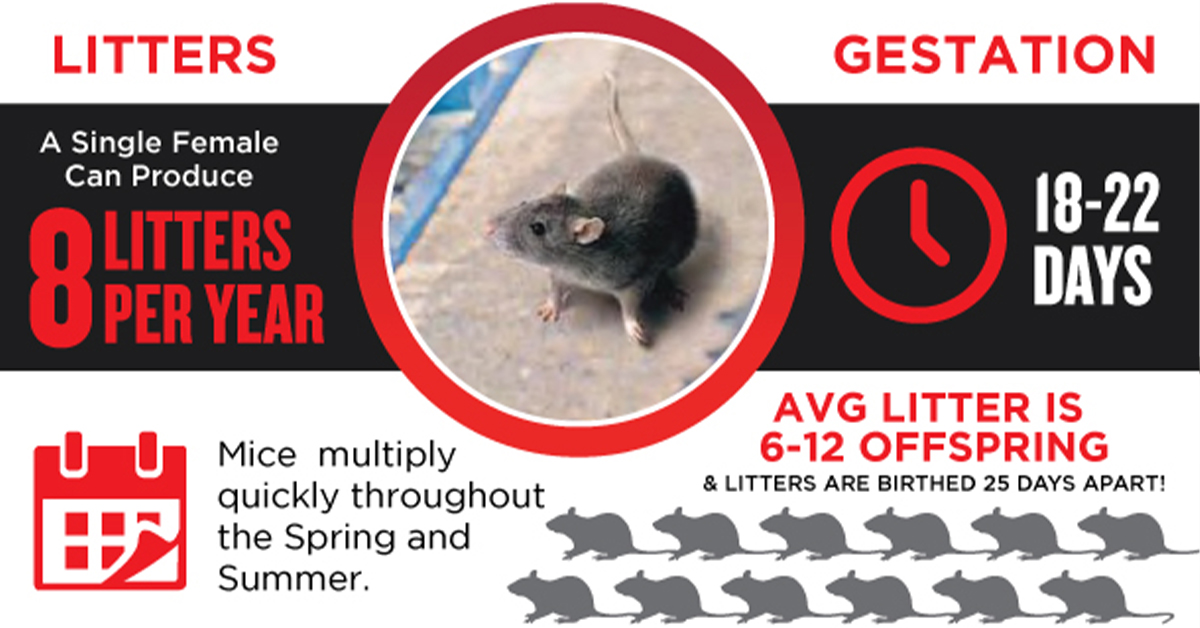Rodent Info-Graphic Image