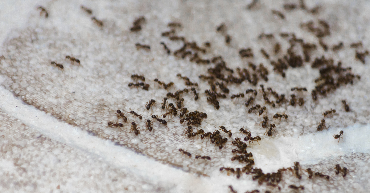 ants-in-home-during-winter
