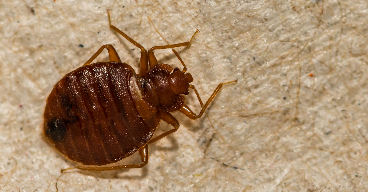 how-to-get-rid-of-bed-bugs-in-essex-county-nj