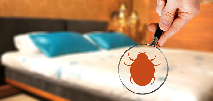 bed-bug-inspection