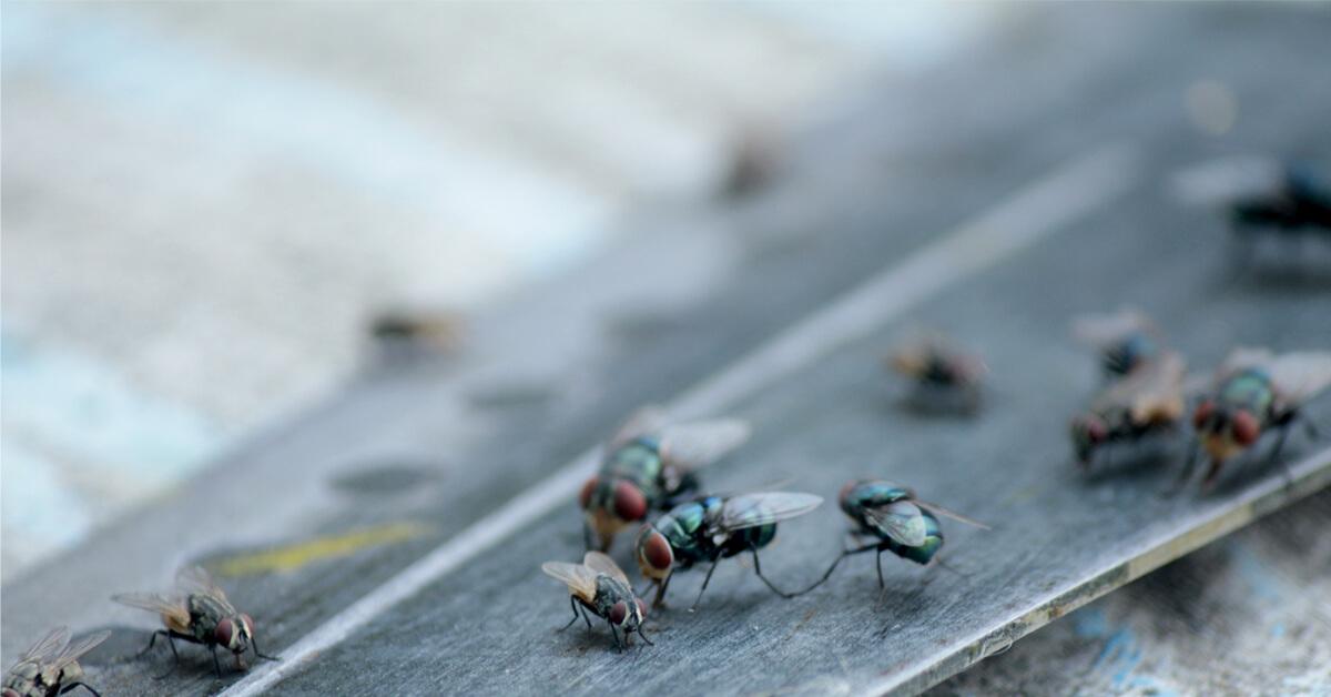 Viking Pest Control - Flies