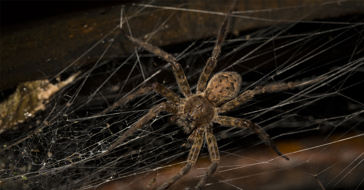 Viking Pest Control - Spiders