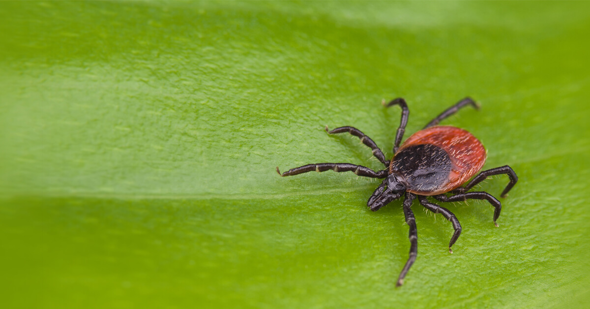 Viking Pest Control - Tick