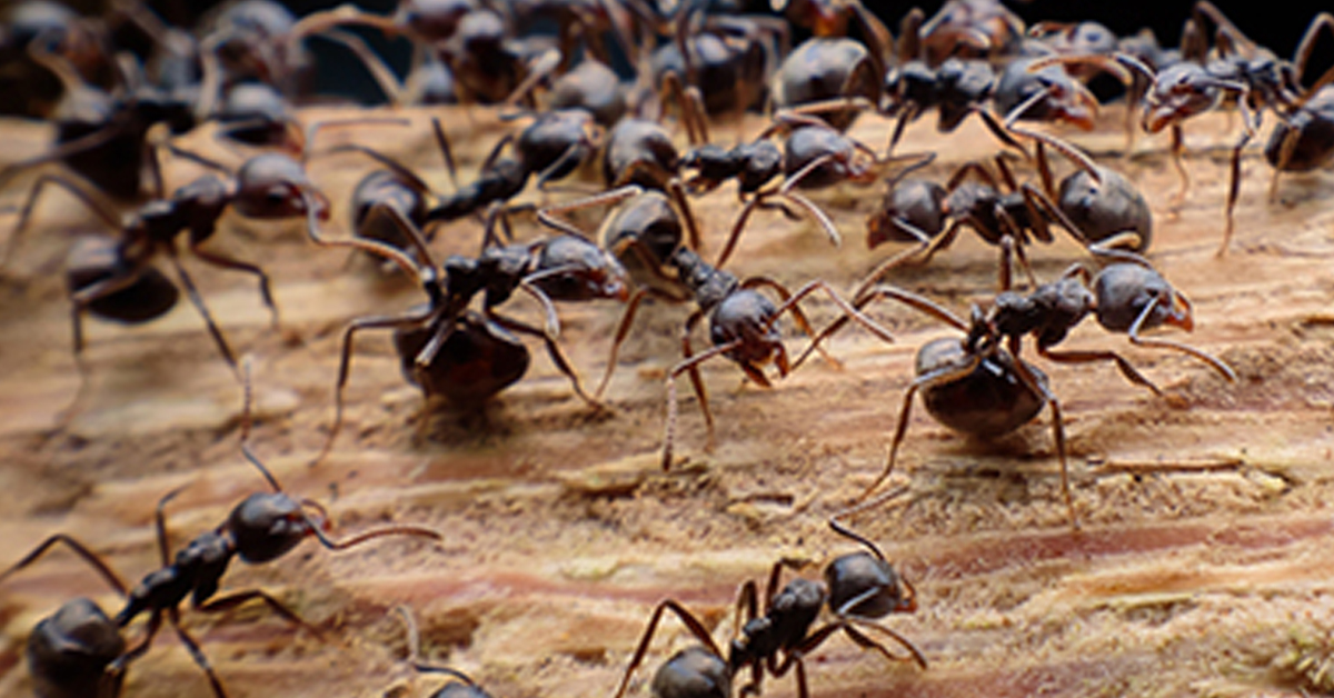 how-to-avoid-carpenter-ant-damage
