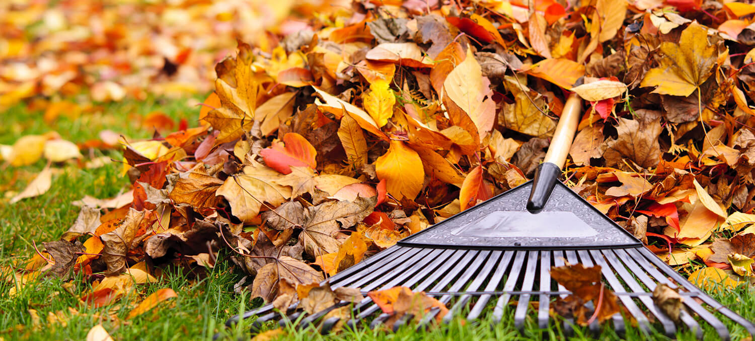 outdoor fall cleaning tips