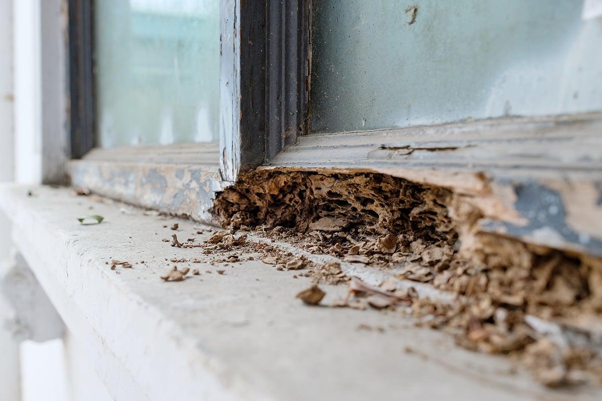 termite-damage-blog-size