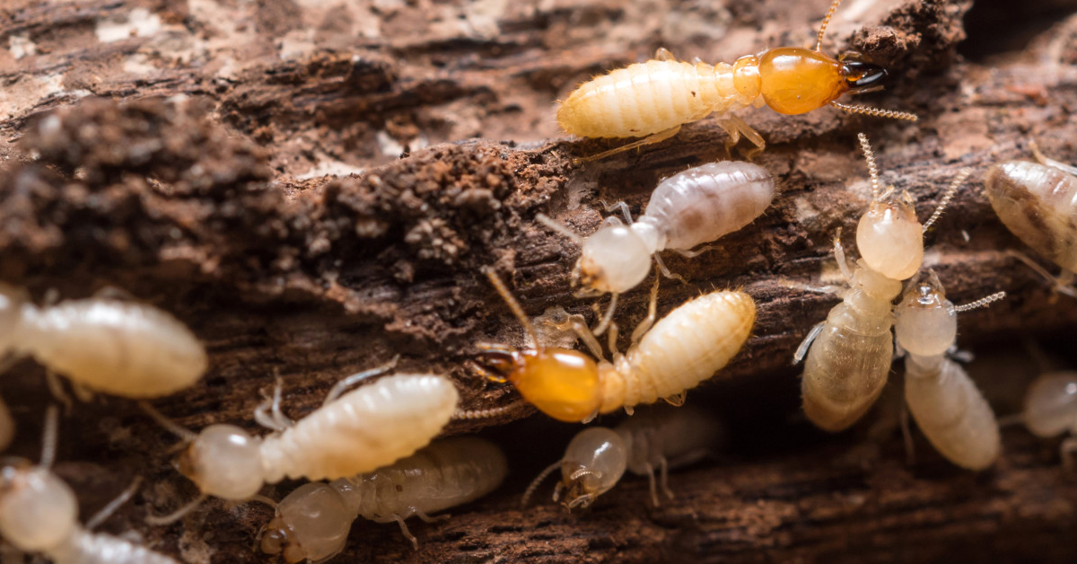 how to get rid of termites in morris county new jersey